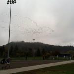 Oiseaux en forme d'oiseaux