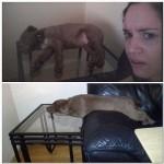 Ce chien dort n'importe comment