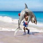 Combattre un requin