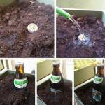 Faire pousser des bières