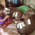 Jouer avec les chiens