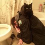 Le chat toujours là pour faire chier