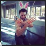 Wolverine lapin