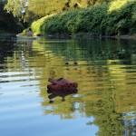 Bateau ... sur l'eau