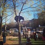 Un gros chat sur un arbre