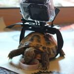Gopro et tortue