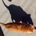 Un chat ou un rat