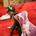 Un coussin pour le chien
