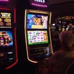 Casino chatons