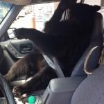 Le copilote est prêt