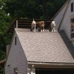 Les chiens volants
