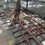 Les racines préfèrent en dehors du sol