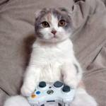 Chat joueur aux jeux vidéos