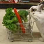 Le lapin qui fait ses courses
