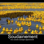 Apparition de canards sauvages